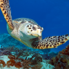 Asinara Diving Center