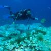 Diving Al porto